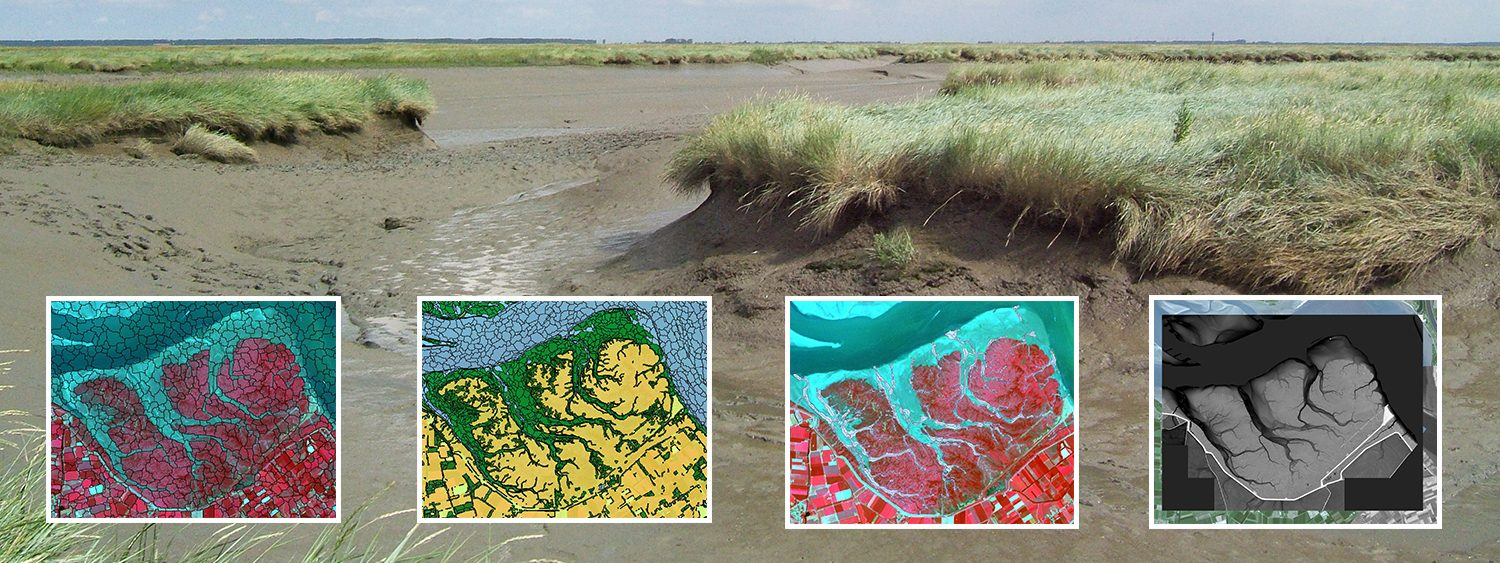 Map the structure of salt marshes using satellite imaging